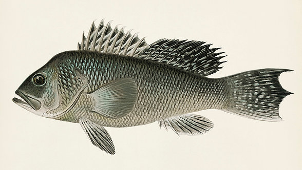 FishSea_A3046