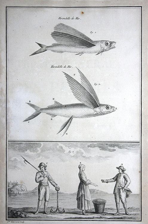 FishFresh_A3037