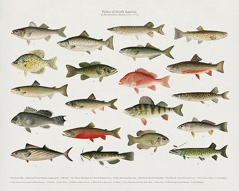 FishFresh_A3005
