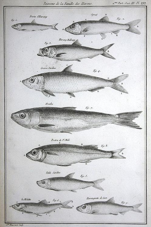 FishFresh_A3031