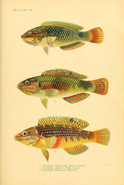 FishSea_A3017