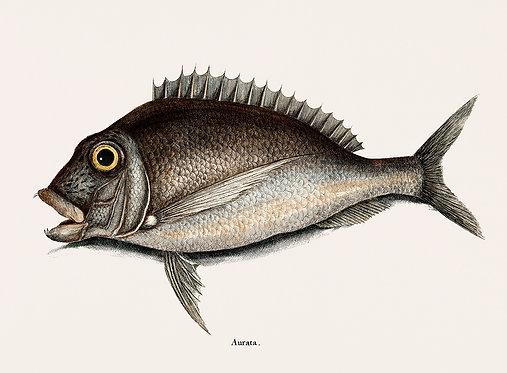 FishSea_A3029