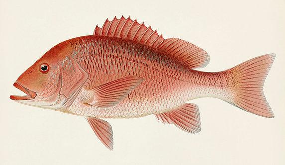 FishSea_A3034