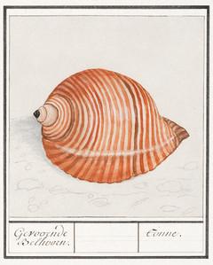 Shells_A3_004.jpg