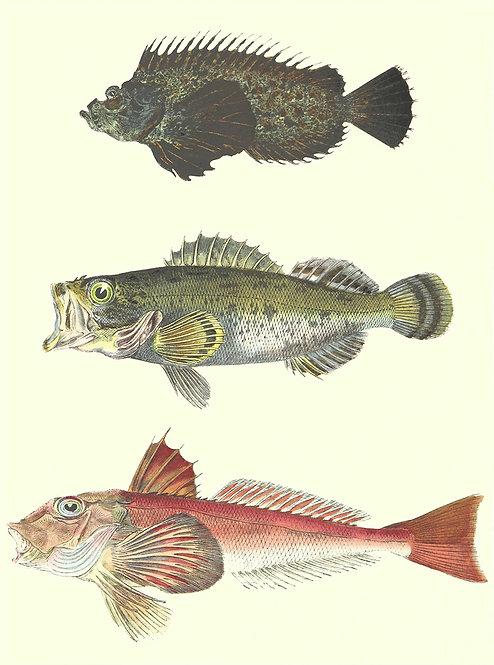 FishSea_A0002
