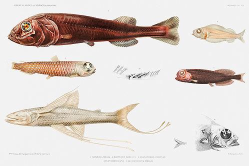 FunkyFish_A3007