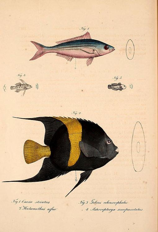 FishSea_A3033