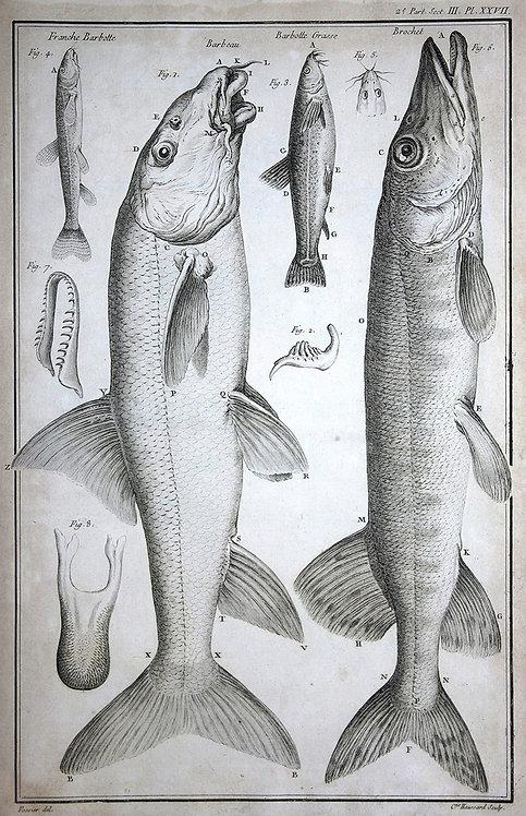 FishFresh_A3033