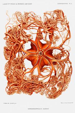 Starfish_A3_001.jpg