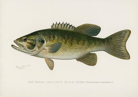 FishFresh_A3008