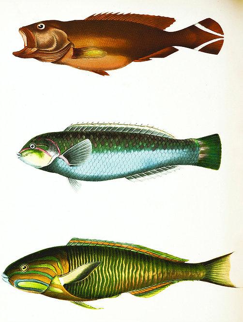 FishSea_A0001