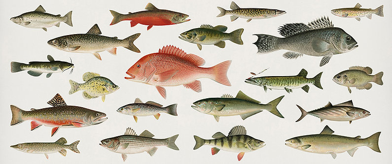 FishFresh_A3012