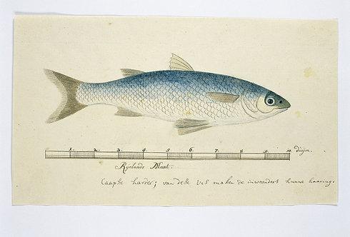 FishFresh_A2007