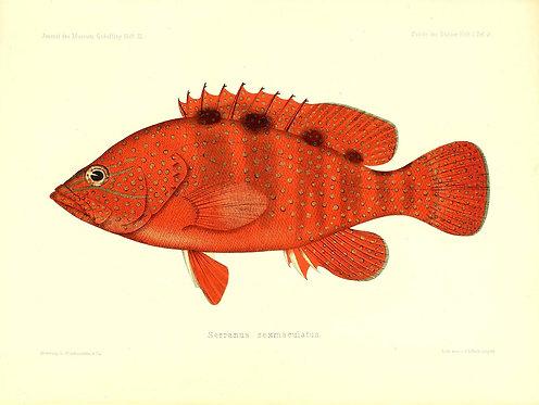 FishSea_A3001