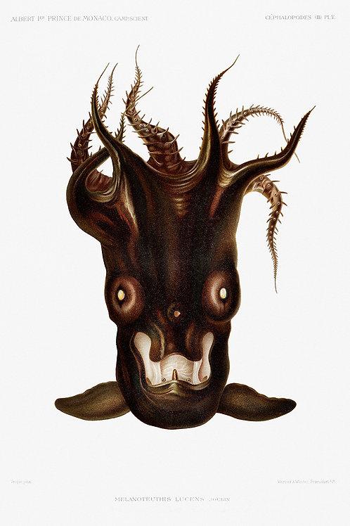 OctopusSquid_A3024