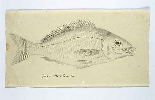 FishFresh_A2001
