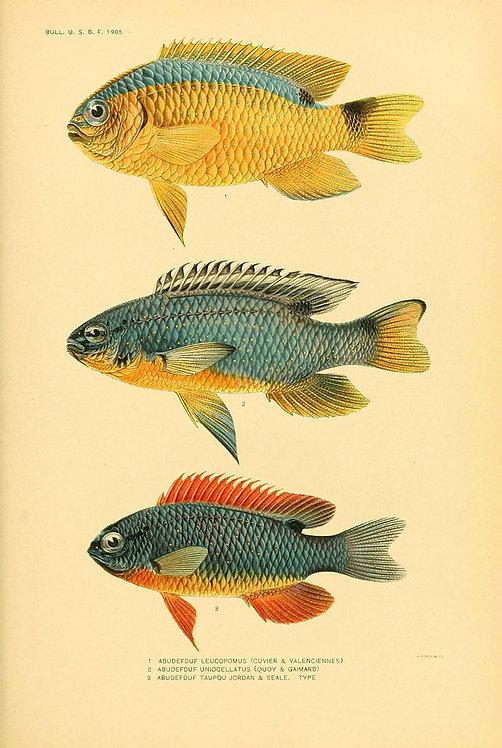 FishSea_A3016