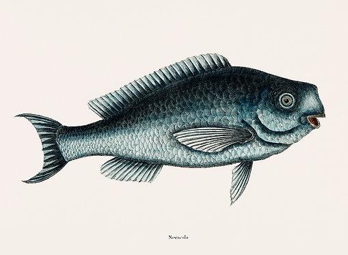 FishSea_A3015