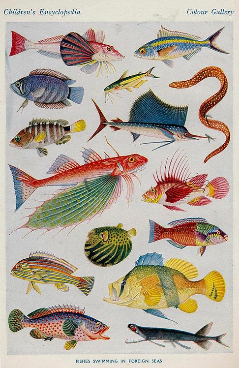 FishSea_A2006