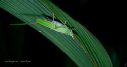 Selva Verde - Night Tour