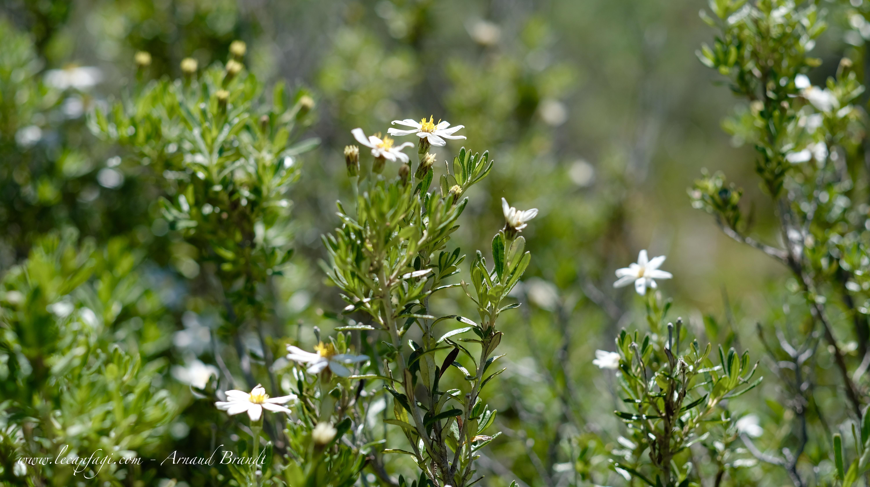 Ushuaïa - Parc Nat. Tierra del Fueg
