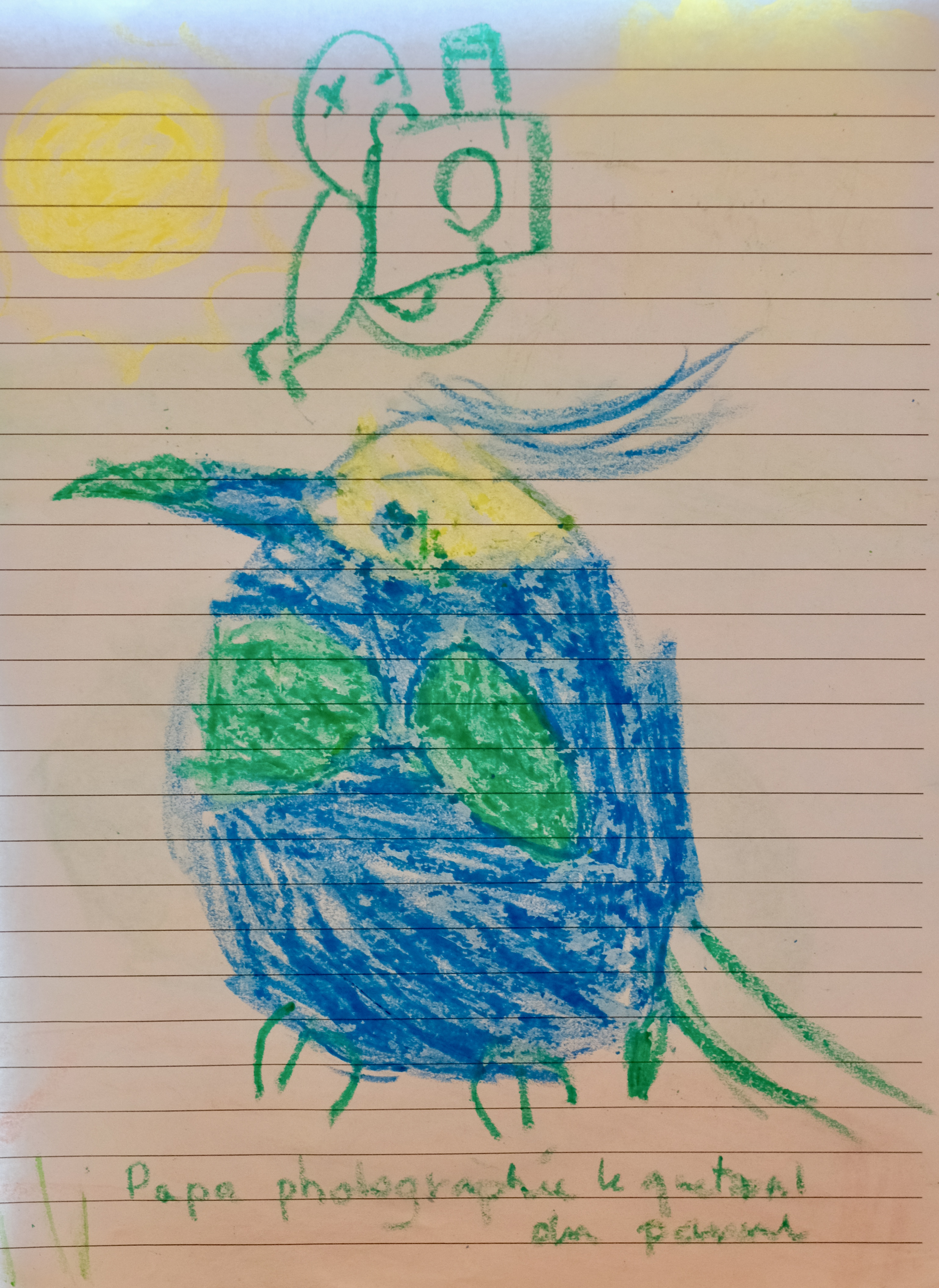 Costa Rica - Quetzal du pauvre
