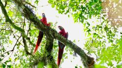 parc national de Carara