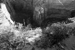 Zion - Angels Landing Trail