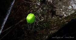 Monteverde - Curi Cancha