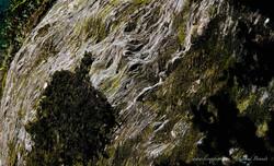 Franz Josef National Park