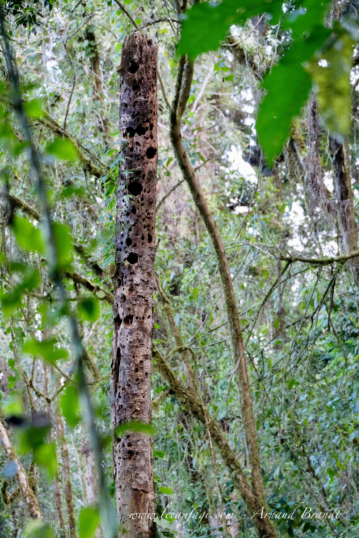 parc national Los Quetzales