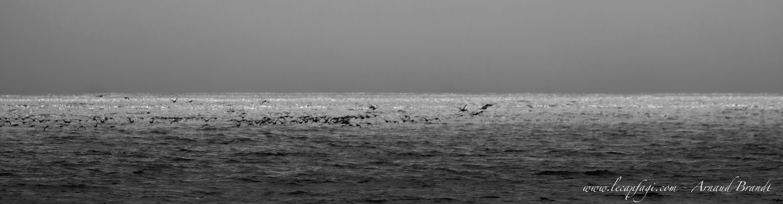 Cape Cod - Nauset Beach