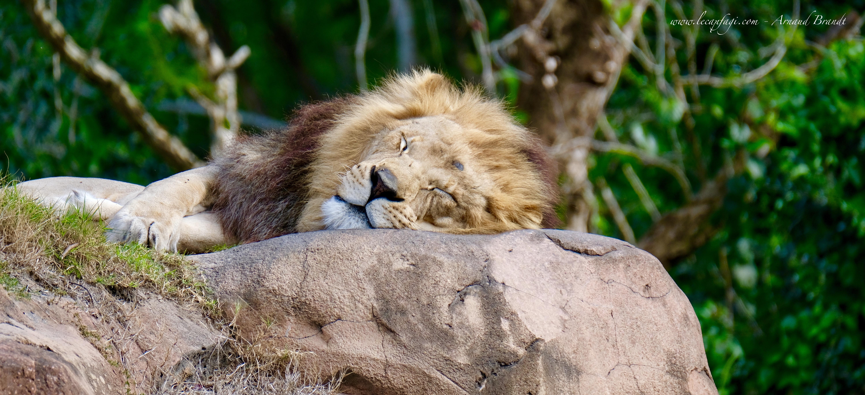 Disney World - Animal Kingdom