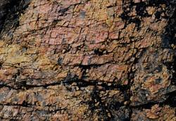 Curio Bay - Petrified Forest