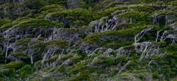 Ushuaïa - Canal Beagle