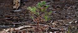 Sequoia Park - new generation