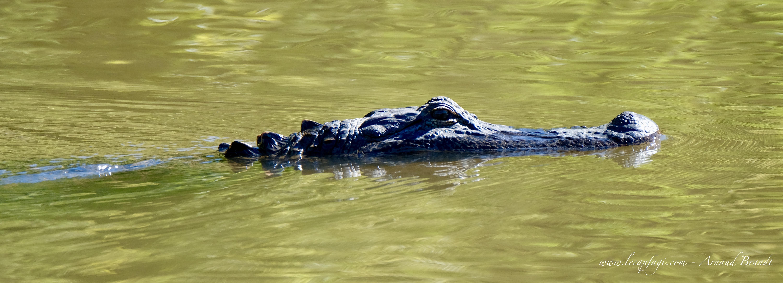 Louisiana - Atchafalaya Basin