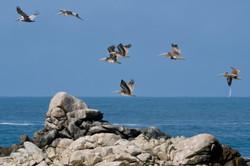 Monterey to Carnel