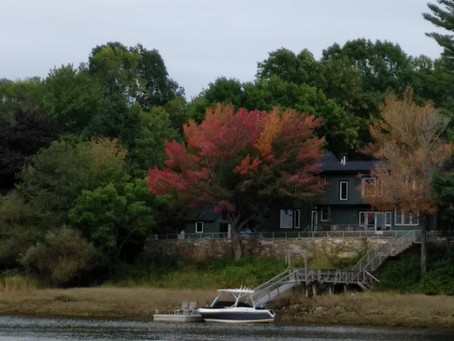 Fall Colors & Swimming Squirrels