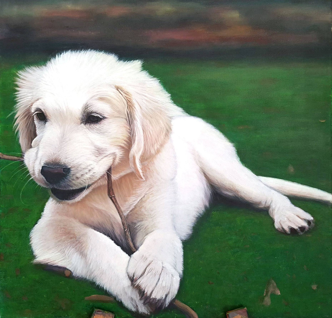 Pets White Lab.jpg