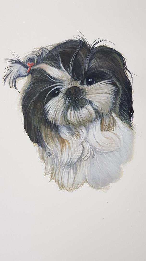 Pets Small Dog with ribbon.jpg