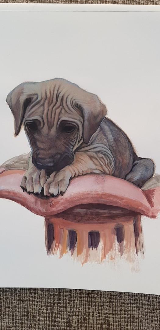 Pets wrinkly brown puppy.jpg