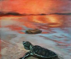 Landscape Baby Turtle Aproaching Sea.jpg