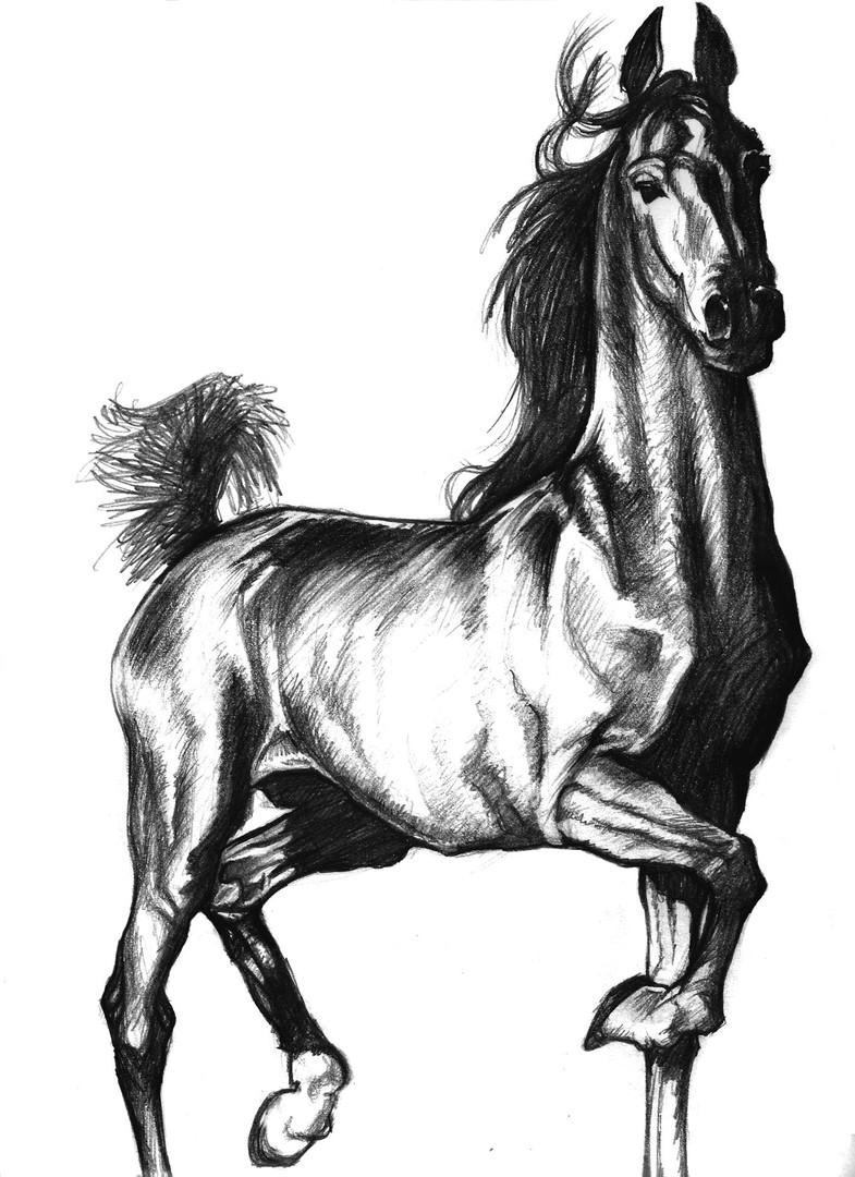 Pets Stallion Pencil.jpg