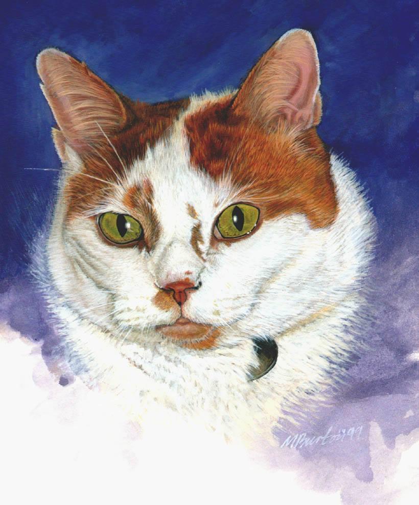 Pets White Ginger Tabi.jpg
