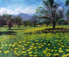 Landscape olive trees, yellow flowers, F