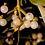 Thumbnail: mistletoe