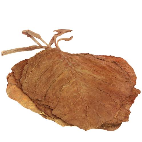 tobacco leaf