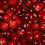 Thumbnail: cranberry