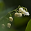 Thumbnail: lily of the valley